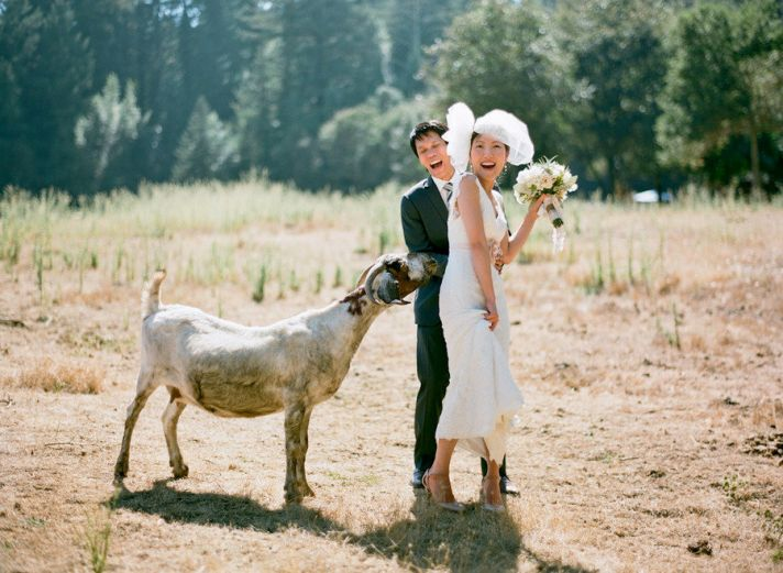 bride groom outside wedding venue animals go wild
