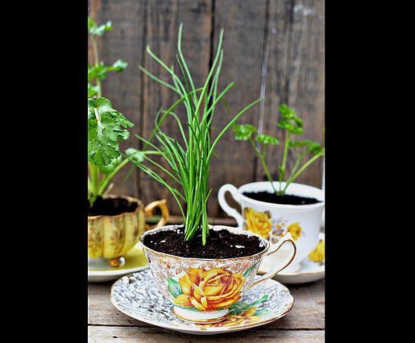 Herbs in a teacup