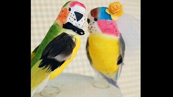Parrot love birds wedding cake