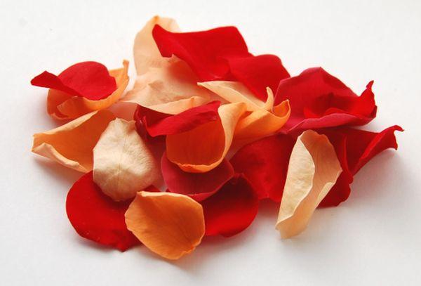 www.confettidirect.co.uk_red orange Rose Petals_£7 the real flower petal confetti company wedding petals autumn fall