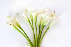 カラー 花 ブーケ 結婚