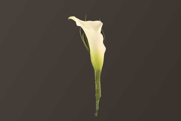 PICTURE OF CALLA LILY BOUTONNIERE