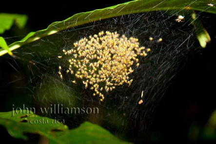 Nature Photography in Manuel Antonio Costa Rica - Baby Spiders
