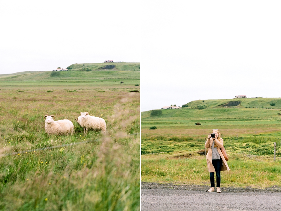 Iceland Wedding and Elopement Photographer