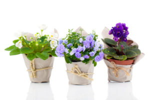 Eco-Friendly Wedding Tips - Potted Plants