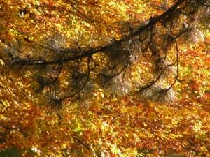 Nadelbaum und Herbstlaub