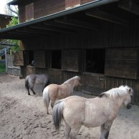 Weddinger Kinderfarm wird geräumt
