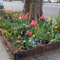 10 Tipps fürs Gärtnern in der Stadt