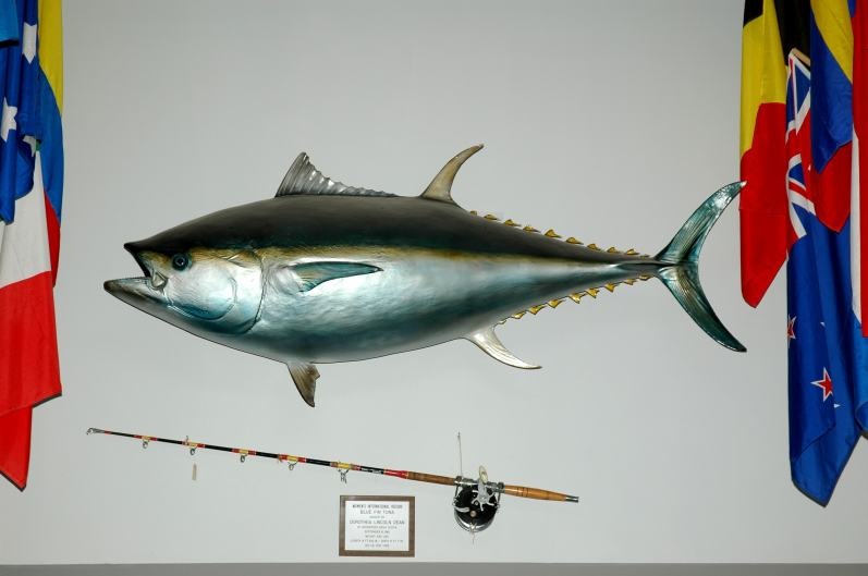 Tuna on the wall