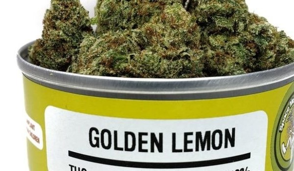 Buy golden lemon online
