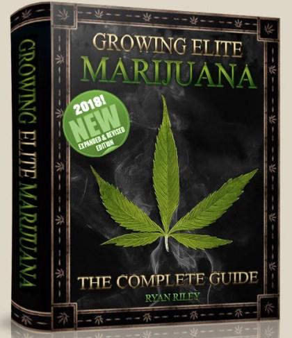 #Growing #Elite #Marijuana @WeedConnection