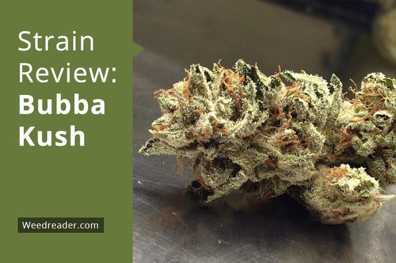 Northern Lights Cannabis Review