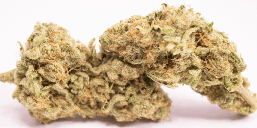 Online Dispensary Canada - Zombie OG Kush Double