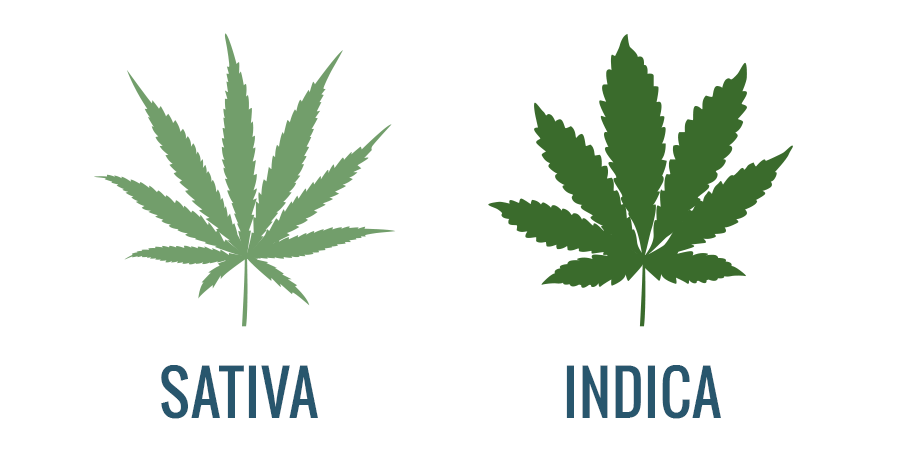What's the difference between indica vs sativa?