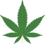 Sign Up For WeedUpdate