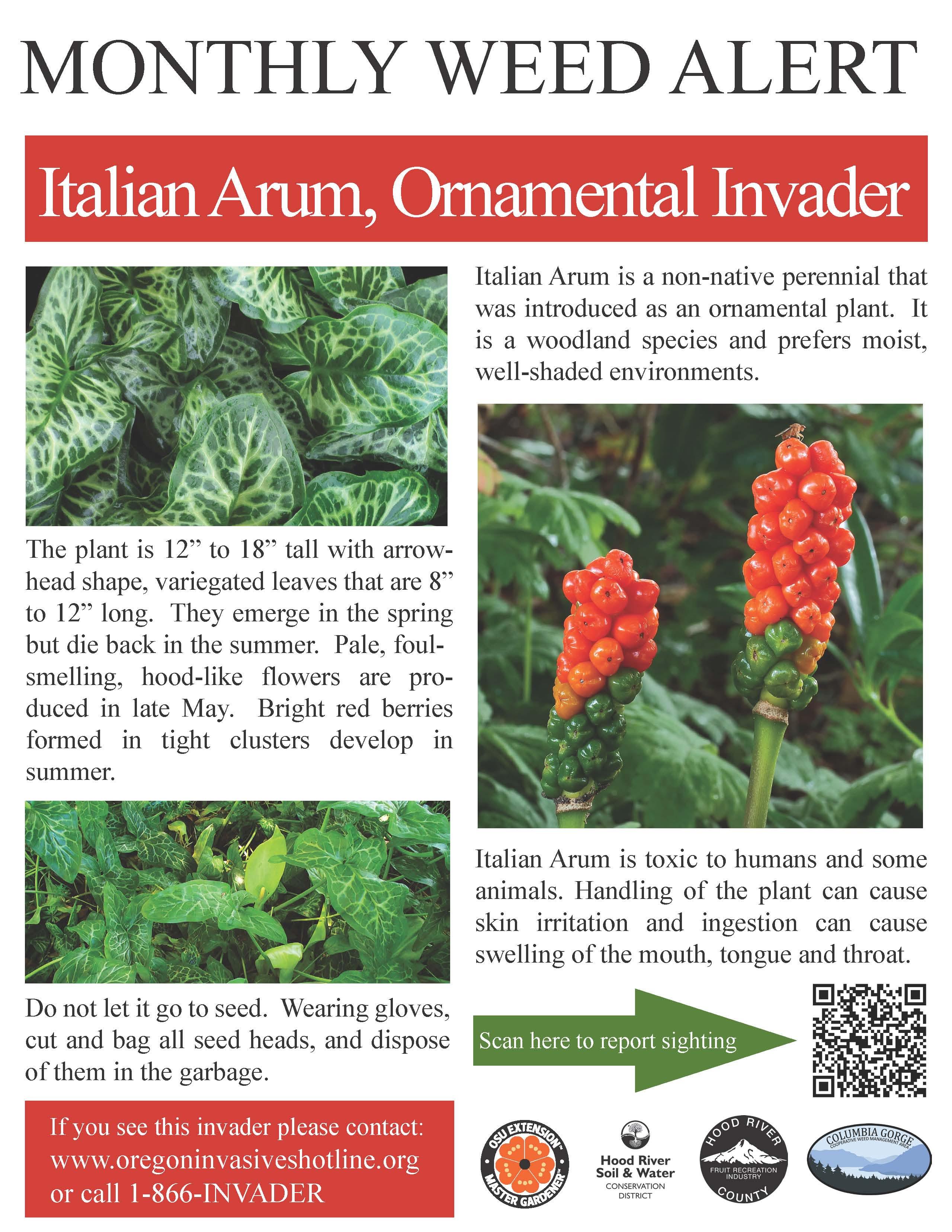 october-italian-arum-weed-alert-poster