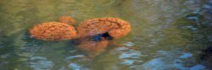 Bryozoanslider