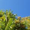 Tree-of-heaven header image