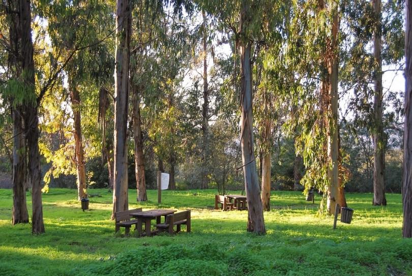 Tables de pique-nique dans le Parc de Monsanto sous les Eucalyptus - Lisbonne