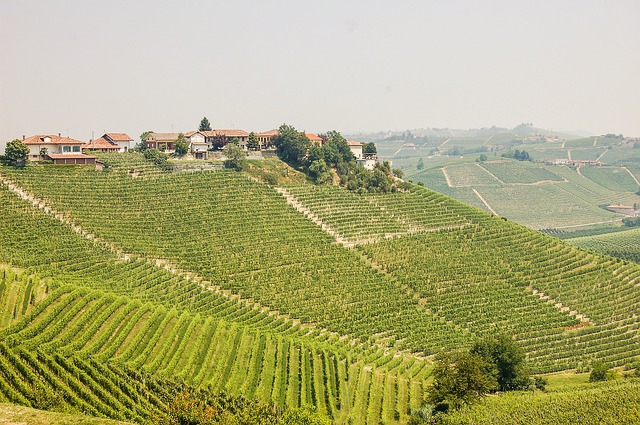 Best wine regions in Italy