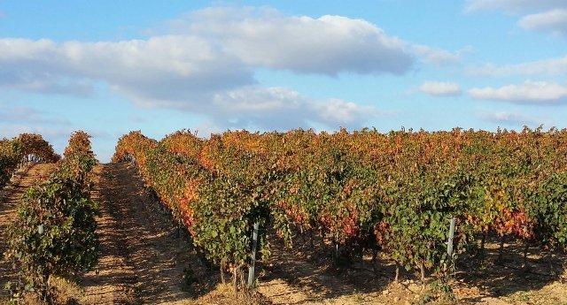 Best wine regions in Spain