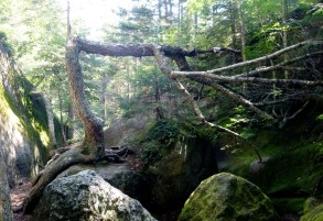 Moose Cave