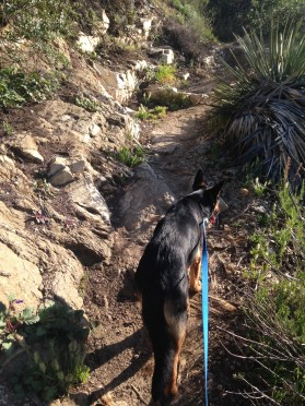 Scout is always leashed on public trails