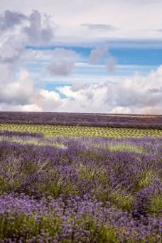 Jess Lavender Shoot - 20-Edit