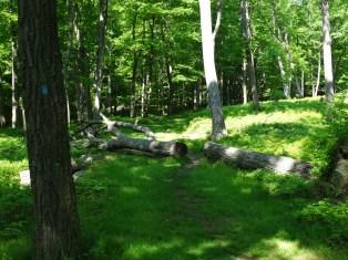 Lake Tiorati Trail