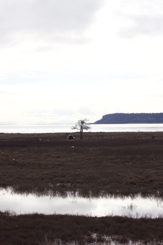 Looking out over the wetlands at Boundary Bay