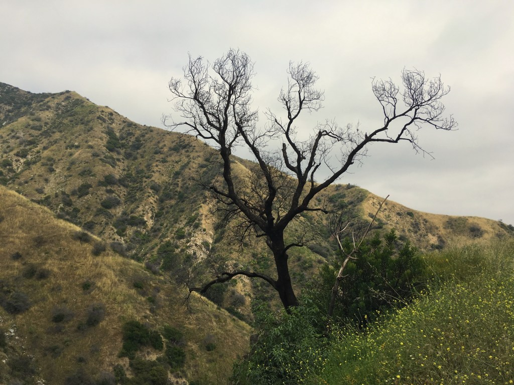 The walnut, chaparral, and coastal sage scrub makes for a stunning landscape