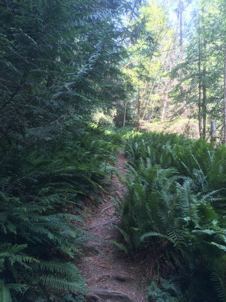 Ferns line the Mount Daniel trail