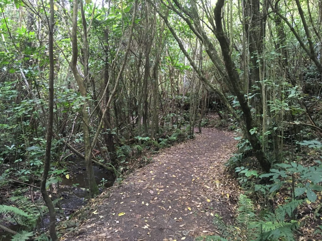 One of many trails through native flora at Zealandia