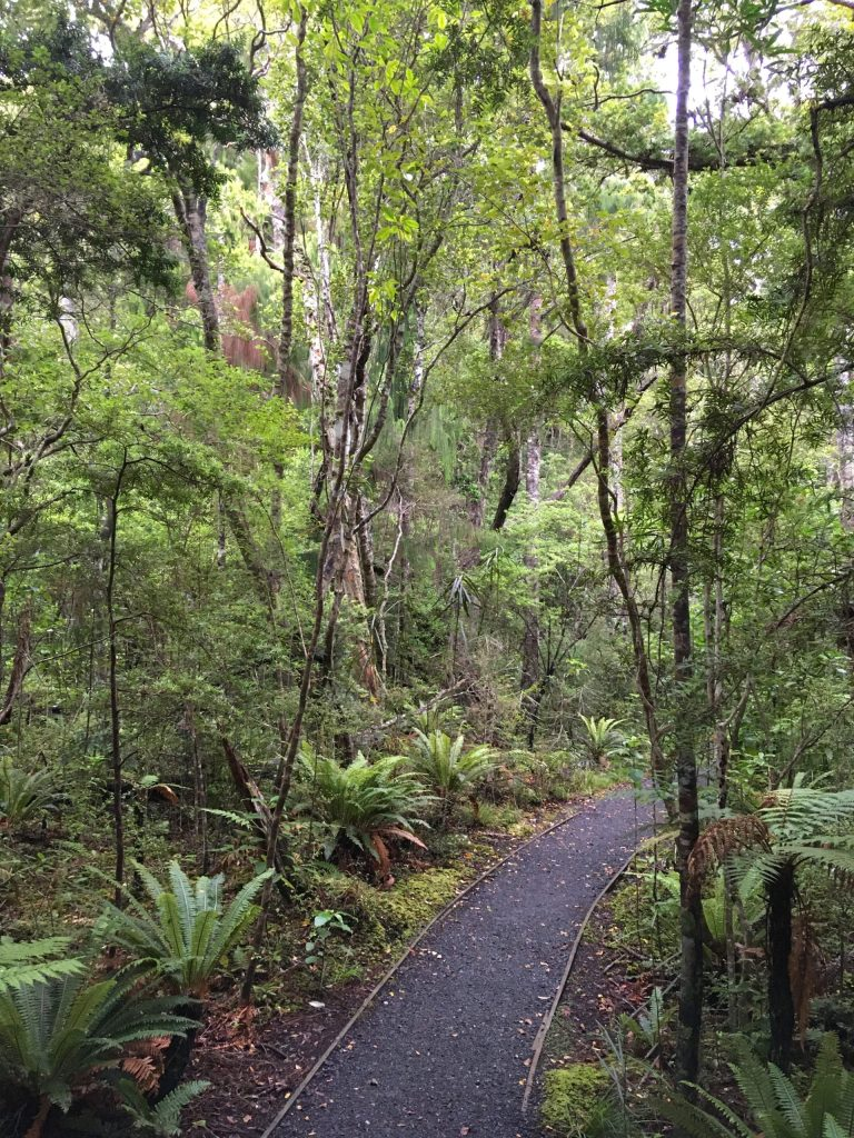 One of many trails through lush temperate broadleaf forest on Ulva Island