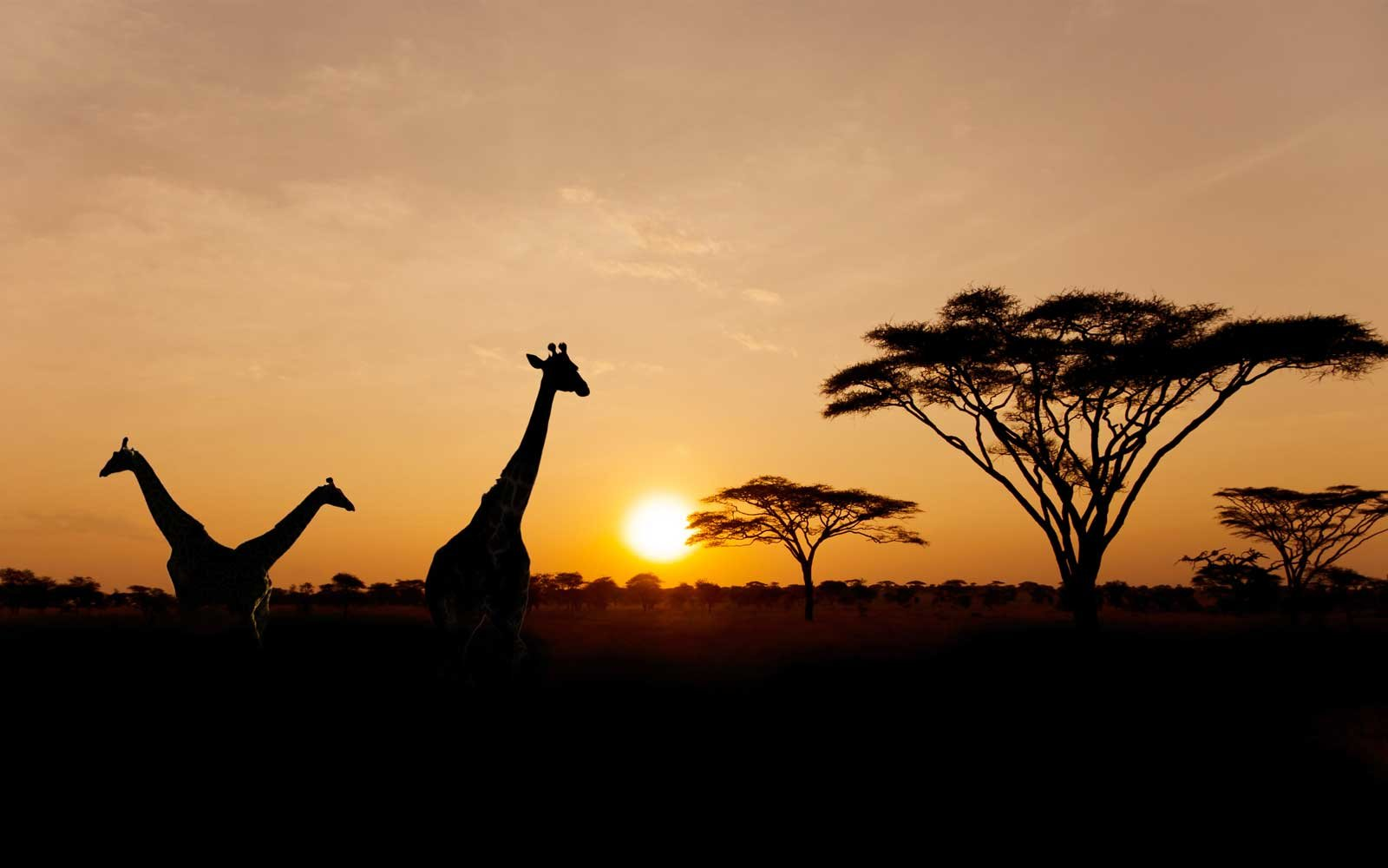 5 Amazing Safari Outfitters