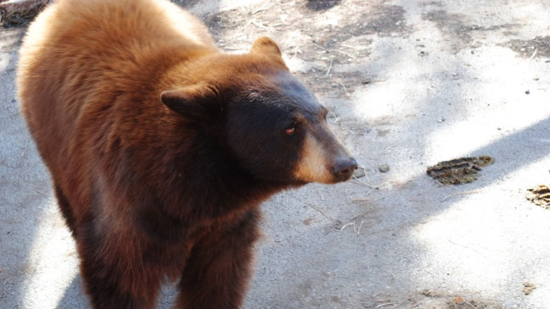10 Things You Must Know When Camping In Bear Country