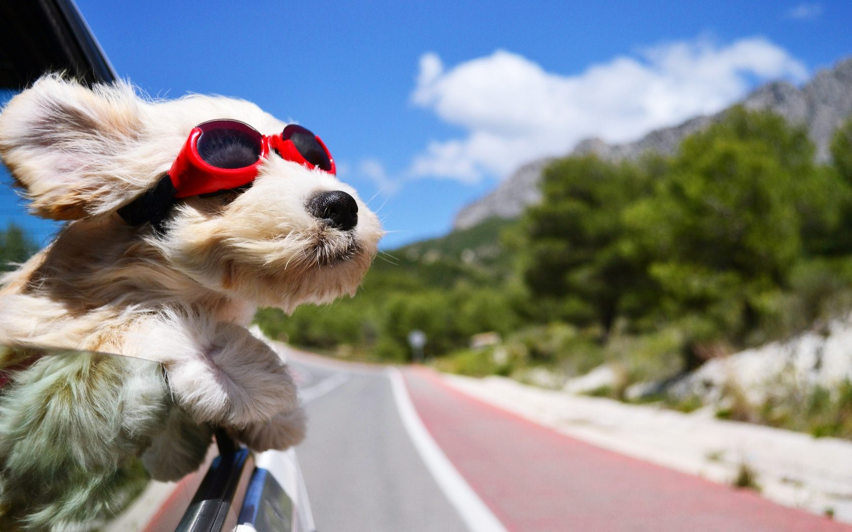 8 Tips For Traveling With Your Dog