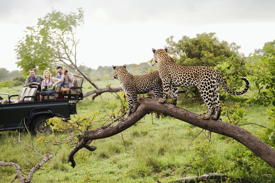 5 Best Safari Spots In Africa