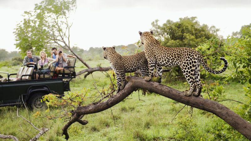5 Best Safari Spots In Africa