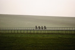 A light haze over Warren Hill with horses running up the hill.