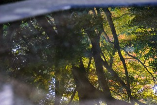 The trees and glimpses of sky in a pool of water at a buddist temple in Nagoya.
