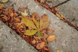 Horse chestnut leaves.