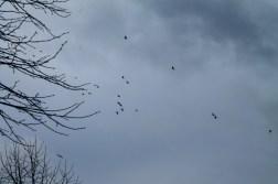 Grey November sky.