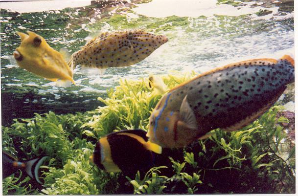 fish-in-aquarium-at-monte-carlo-50.JPG