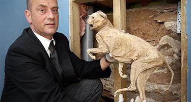 mummified_cat