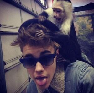 biebers_monkeyB