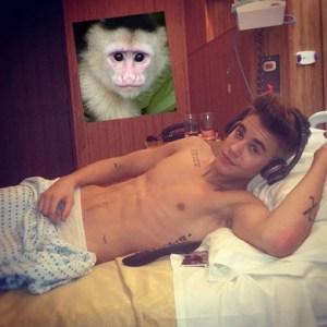 biebers_monkeyF