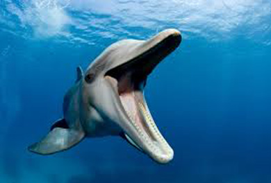 dolphins_worldB