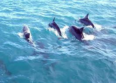 dolphins_worldD