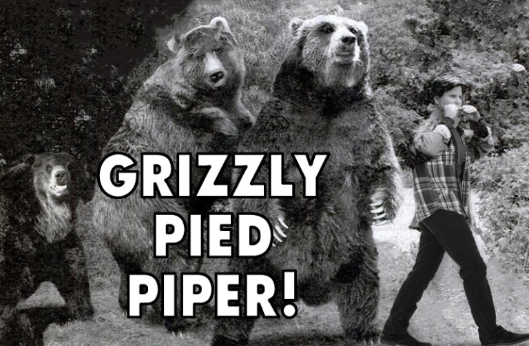 Grizzly Pied Piper